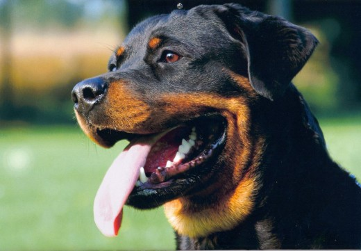 Ученые доказали способность собак вынюхивать рак