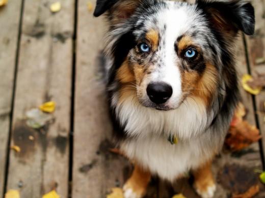 Почему даже собаки сосисок не едят?