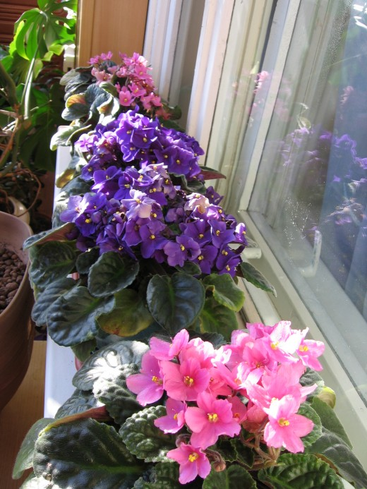 Влияние освещения на здоровье растений.