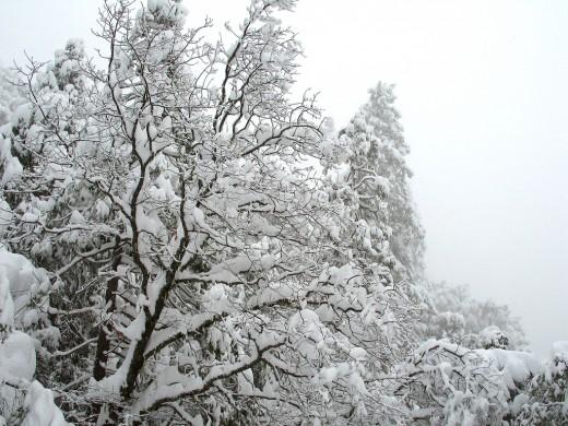 Москвичи в интернете стали чаще интересоваться погодой