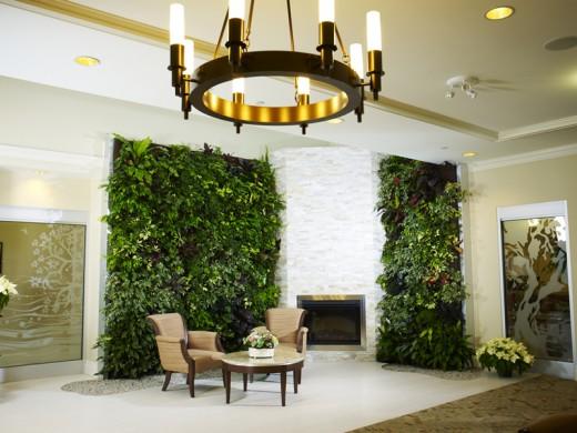 Живая зеленая стена в квартире