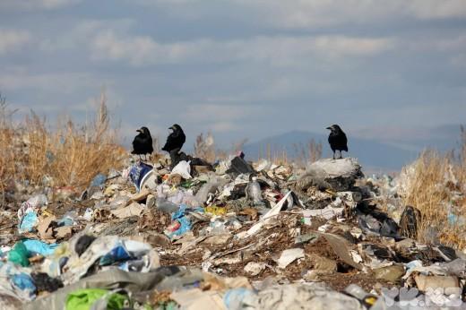 В администрации Рязани утвердили план действий по закрытию опасной свалки в черте города