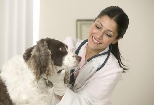 Как выбирать ветеринарную клинику