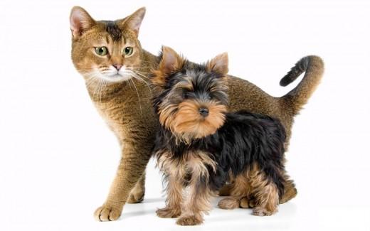 Как выбрать домашнее животное для квартиры?
