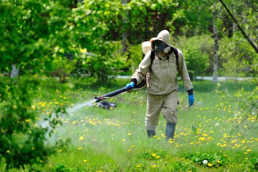 Дезинсекция - борьба с насекомыми на современном уровне