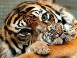 Животные родители