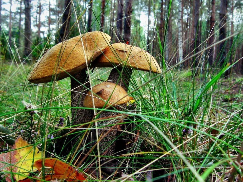 Ходить в лесу — видеть смерть на носу