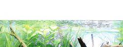 Аквариум –  окно в мир природы