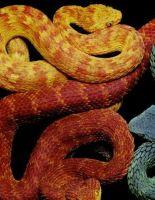 Змеи и искусство