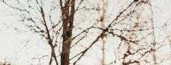 Современные павлопосадские платки с мехом – отличное качество по разумной цене