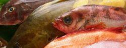 Как выбрать свежемороженую рыбу?