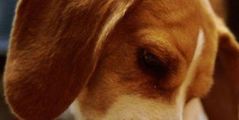Как правильно кормить собаку?