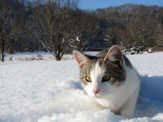 Кошки в снегу
