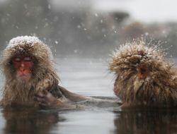 Зимние виды северного полушария