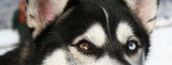 10 самых опасных собак мира