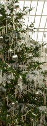 Рождественские и новогодние елки: вечнозеленые красавицы