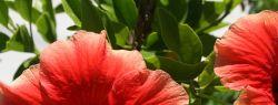 Какие комнатные растения приносят семейное счастье?