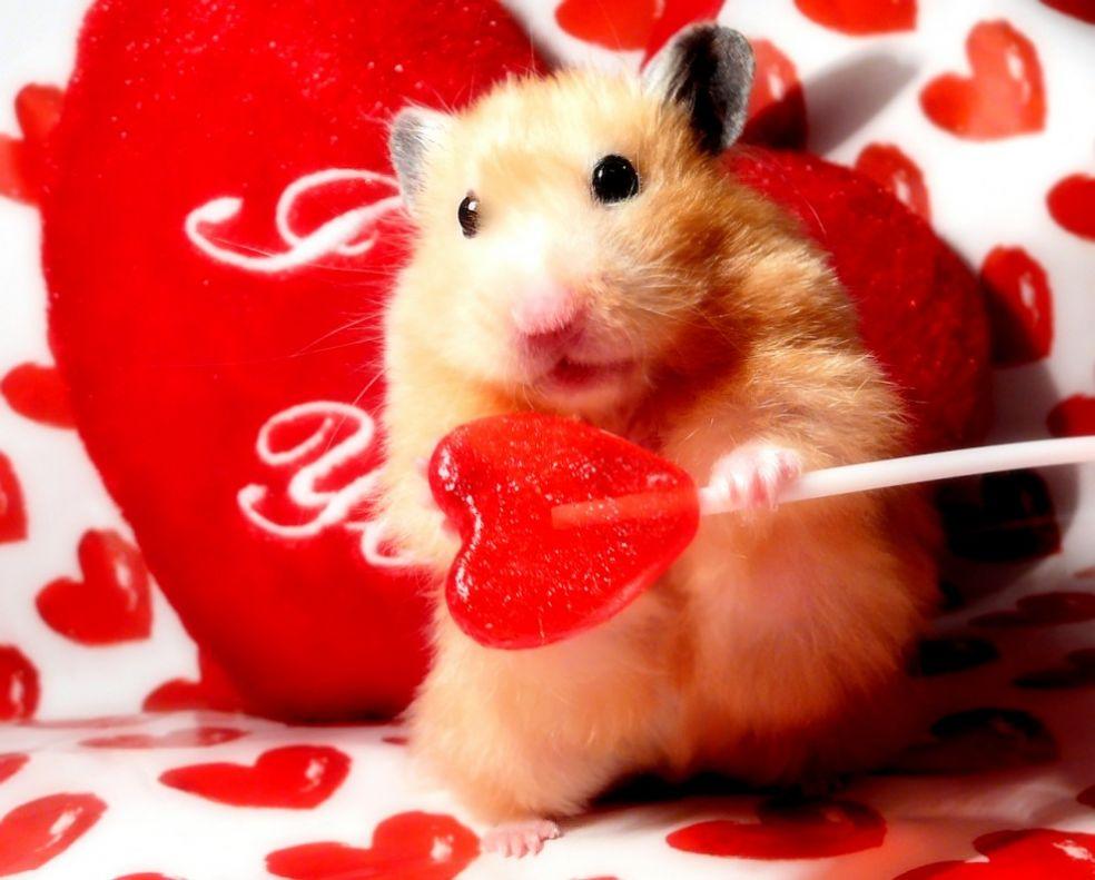 Хомячок с валентинкой