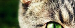 Всемирный день кошек отмечается 1 марта