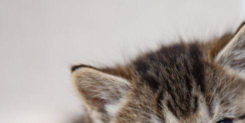 О кошках: только факты