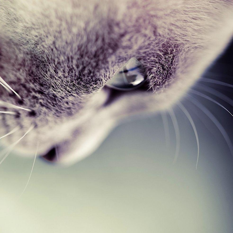 Кошка видит