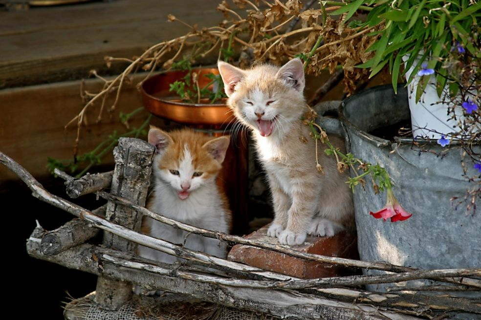 Кошки и сладкое