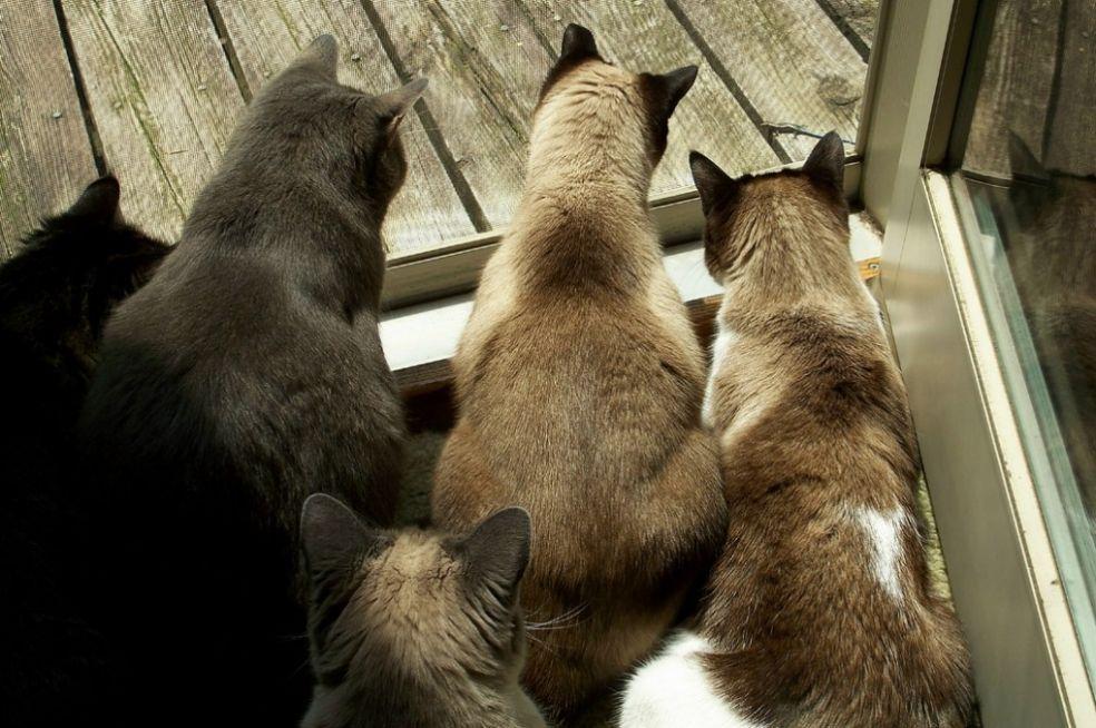 Пять котов и одна ящерица