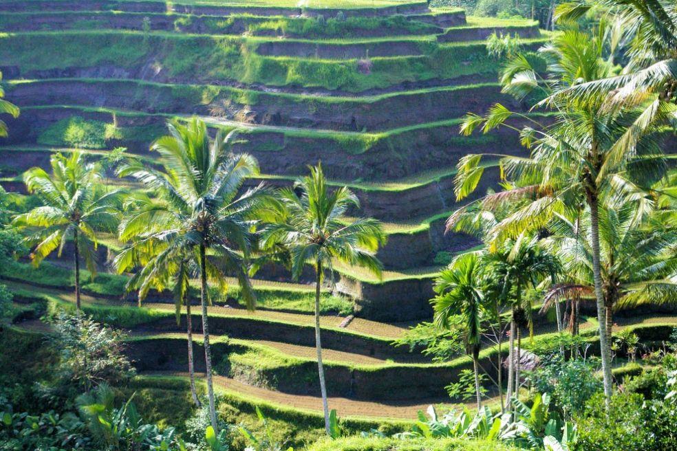 Террасное земледелие на Бали