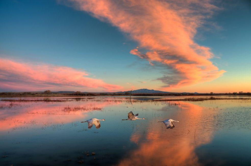Закат в Боске дель Апачи, США