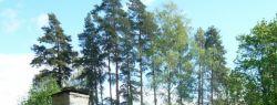Зеленая крыша — красивая экология
