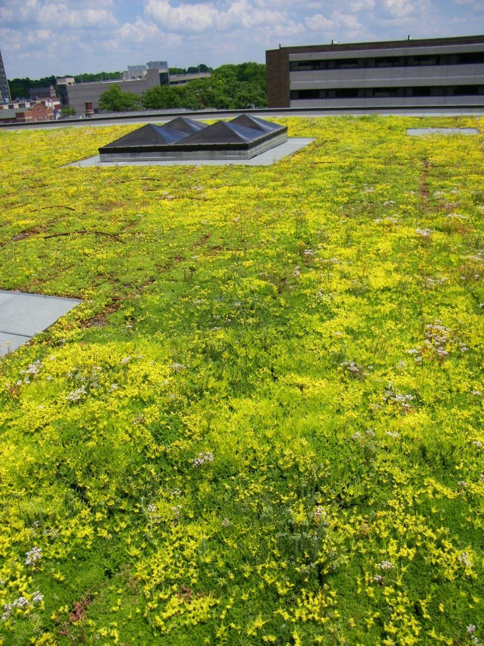 Зеленая крыша Библиотеки Университета Мичигана