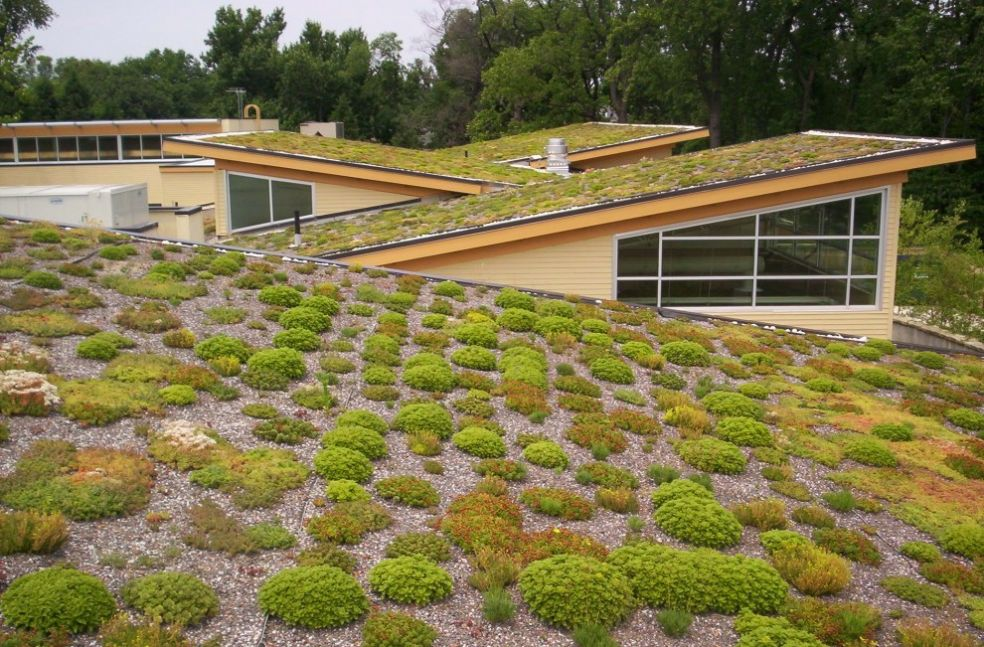 Зеленая крыша в Арлингтоне