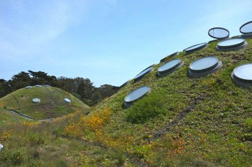 Жизнь под зеленой крышей