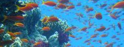 Большой барьерный риф перестает расти?