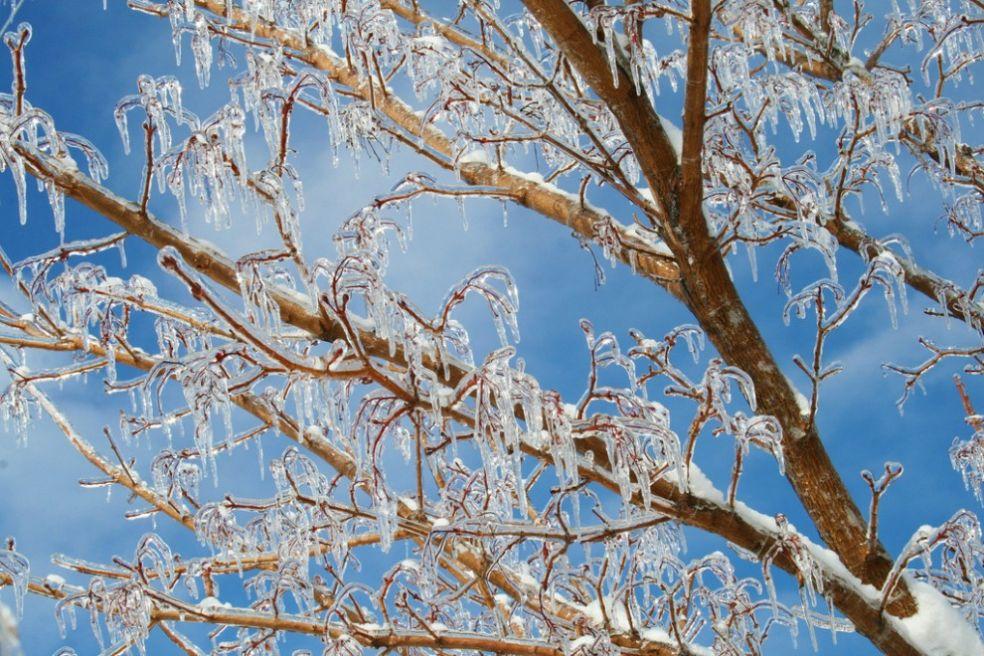 Снежинка-рекордсменка