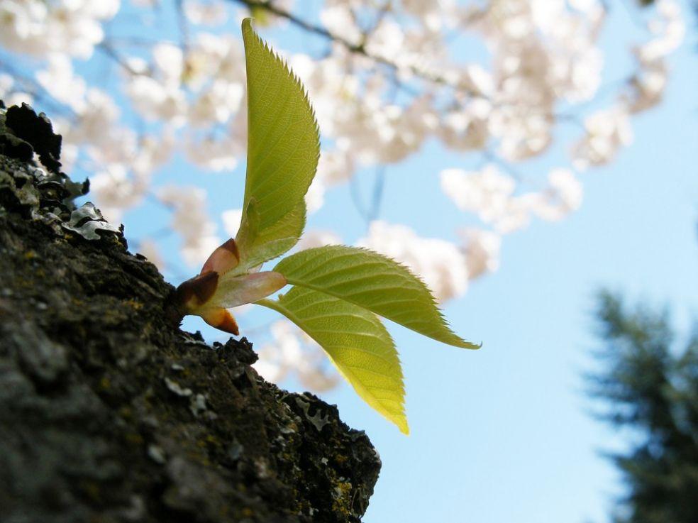 Весна в Кирклэнде, США