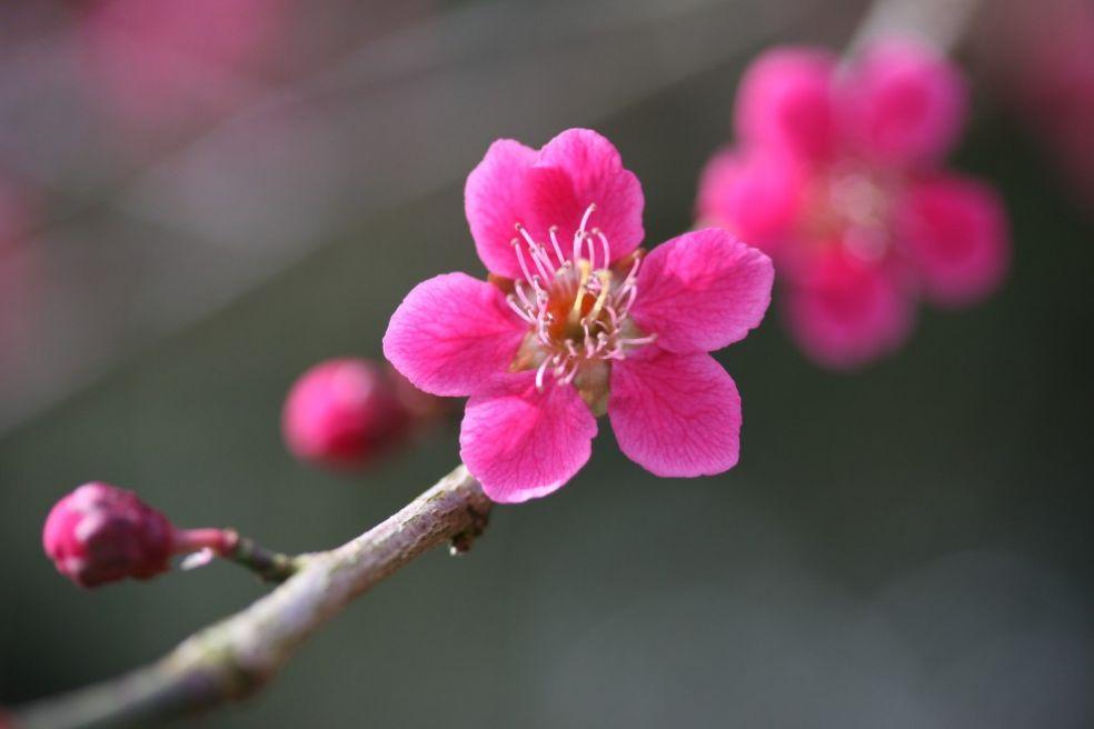 Весна в Национальном дендрарии в Вестонбирте, Великобритания