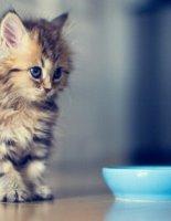 Здоровый котенок, здоровый кот
