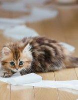 Как отучить кошку гадить где попало